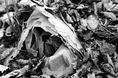 Wollmannsberg (Harald Reichmann) Tags: wollmannsberg michelberg wald boden herbst plastik müll film olympusom4 struktur muster