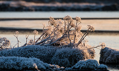 Thingvellir National Park. (heldur_betur photography) Tags: thingvellirnationalpark