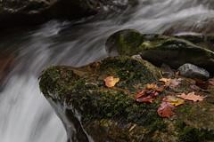 Grisedale Beck #6 (Roantrum) Tags: cumbria grisedalebeck lakedistrict roantrum waterfall england unitedkingdom mf19