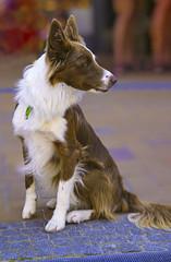 Animals (ost_jean) Tags: animals nikon d5300 tamron sp af 1750mm f28 xr di ii vc ld ostjean