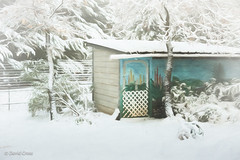 The Garden Shed (HSS) (buffdawgus) Tags: autumn 50mm landscape nevadacity sierranevadafoothills cementhillroad myhouse home topazstudio fall canon5dmarkiii snow gardenshed canon50mm18 lightroom6 california nevadacounty cementhillhouse