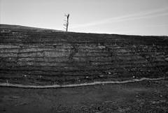Landscape, Oregon (austin granger) Tags: oregon linnton topography tree stark land soil dirt hill film ortho gw690ii