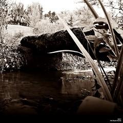 C'est toujours mieux en face (Un jour en France) Tags: noiretblanc noiretblancfrance sepia carré square pont ruisseau canoneos6dmarkii canonef1635mmf28liiusm