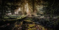 Morning light (andredekok) Tags: nature woodland forest landscape sunlight hiking winterwood fog mist