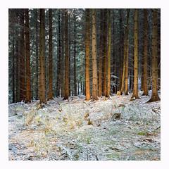 A touch of Snow - Kodak Porta 160VC (magnus.joensson) Tags: sweden swedish skåne svedala snow october rolleiflex 35 6x6 medium format carl zeiss tessar 75mm c41 kodak porta 160vc exp2008