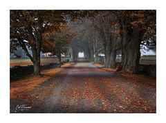 On The Road To The Stables (windshadow2) Tags: autumn farm horse stable stables leaves road landscape trees rural fall country horses ri usa canon 5d mark iii