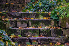 Steps (FocusPocus Photography) Tags: stufen stairs steps stein stone alt old blätter leaves herbst autumn fall