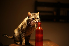 One Bourbon One Scotch One Beer (ela.ch) Tags: happycaturday glass tiny