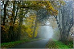 Herbstwege (Barbara Wenzel-Winter) Tags: herbst autumn fischerhude strasse streetshot nebel afoggyday bäume herbstbäume landschaft herbstlaub niedersachsen norddeutschland dernorden