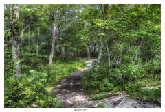 Mountain Path. Mount Pack Monadnock, NH USA (Pearce Levrais Photography) Tags: tree forest plant path leaf leaves green summer summertime outside outdoor nature sony a7r3 hdr thebestofhdr landscape sun sunny shadow contrast ilce7rm3