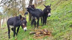 Astoak bustita (eitb.eus) Tags: eitbcom 23850 g1 animales gipuzkoa oñati gurutzeazcarate