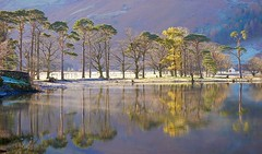 Lake Buttermere (lesleydugmore) Tags: buttermere lake lakedistrict cumbria england uk britain europe water outside outdoors rural trees reflections yellow colours lakedistrictnationalpark nationalpark