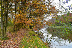 0369 autumn scene (leike49) Tags: autumn outdoor trees water canal reflection path amateurphotography nikon d5300