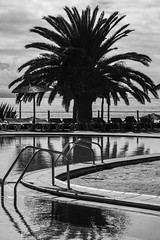 clima lanzaroteño (Patrick Doreau) Tags: palmier arbre noir blanc black white negro blanco reflet réflexion eau water ciel sky grey gris nuages piscine swimmingpool lanzarote îlescanaries espagne spain españa clouds