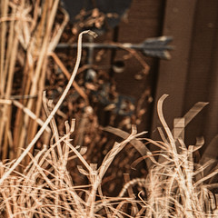 Motion Blur HSoS! :-) (Dotsy McCurly) Tags: smileonsaturday motionblur hsos happysmileonsaturday yard nj newjersey grasses nikonz7 mirrorless manualfocus handheld mitakon zhongyi speedmaster 50mm f095 iii