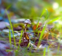 DSC_8320-AD (adenkis) Tags: nature naturephotography autumn macro bokeh