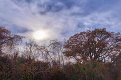 Low Sun In Autumn (Modkuse) Tags: nature natural natureart art artphotography photoart artistic artisticphotography sky sun clouds cloudyday cloudy autumn autumnlandscape autumncolor autumncolors fallcolors fallcolor fall falllandscape fujifilm fujinon fujifilmxh1 xh1 fujinonxf1655mmf28rlmwr xf1655mmf28rlmwr outdoors