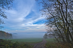 Into the Mist (pstenzel71) Tags: aussicht deutschland landschaft rudolstadt thuringia thüringen autumn fall herbst november fog nebel ilce7rm3 sel24f14gm feld weg path darktable mist misty