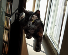 Morning Sun Spot (annette.allor) Tags: happycaturday cat windowsill glass windows indoor