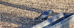 J78A1365 (M0JRA) Tags: wild life parks yorkshire birds people paths animals