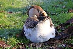 J78A1366 (M0JRA) Tags: wild life parks yorkshire birds people paths animals