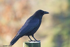 J78A1370 (M0JRA) Tags: wild life parks yorkshire birds people paths animals