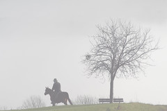 November Morning Ride (Elenovela) Tags: november nebel mist fog morgenstimmung morningmood morgenlicht morninglight reiter rider ritt ride pferd horse baum tree sonyrx100markvii elenovela karstenmüller