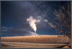 2019 11 30 Bevern  IR 680nm  - 18 (Mister-Mastro) Tags: bevern niedersachsen factory monokultur birkenwald birchforrest ir infrared 680nm steam rauchwolke