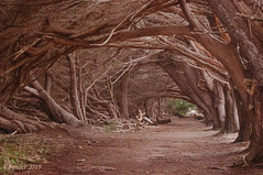 Hidden Trail (Greatest Paka Photography) Tags: trail hidden canopy trees halfmoonbay branches path walk forest