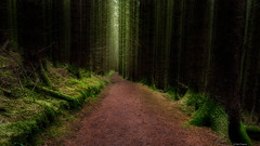 The path through Brecklet woods (Dan_Fr) Tags: glencoe ballachulish highlands scotland brecklet uk woods woodland forest trees path vanishingpoint landscape nature moss green sony a7r