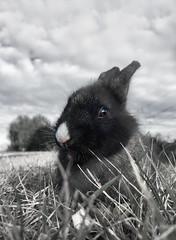 Nato dall'erba (Fiorenzo Delegà) Tags: bunny coniglio brado rabbit lapin conejo