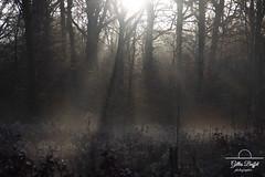 Dans la clairière - in the clearing (gopillentes) Tags: brume mist arbres trees landscape paysage forêt clairière clearing forest bourgogne burgundy france fleurs flowers