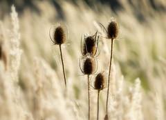 _give me five (SpitMcGee) Tags: septemberwiese meadowinseptember fünf five herbst autumn autumnjazz spitmcgee wildekarde