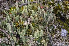 Lichen Wonderland