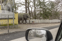 Encounter (verblickt) Tags: austria waldviertel elephants urban