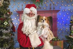 62_b_Nipples (Salty's Pet Supply) Tags: santa photo holiday christmas xmas dog dogs cat pets fang portland pdx oregon charity pongo matthowl nancyfedelem christmasstory backdrop iphone canon iphonography portrait community