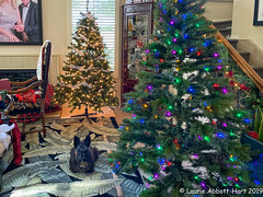 IMG_8298 (Laurie2123) Tags: christmas2019 laurieabbotthartphotography laurieturner laurieturnerphotography laurie2123 maggie missmaggie odc odc2019 ourdailychallenge decorating home mess