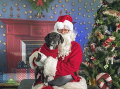 18_b_Kevin (Salty's Pet Supply) Tags: santa photo holiday christmas xmas dog dogs cat pets fang portland pdx oregon charity pongo matthowl nancyfedelem christmasstory backdrop iphone canon iphonography portrait community