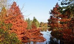 BODENHAM ARBORETUM (chris .p) Tags: bodenham arboretum worcestershire nikon d610 tree trees light autumn 2019 england uk lake water view november reflections