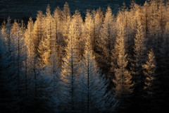 Photo of Cold Light