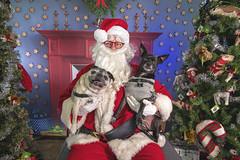 17_c_Lucy_Otis (Salty's Pet Supply) Tags: santa photo holiday christmas xmas dog dogs cat pets fang portland pdx oregon charity pongo matthowl nancyfedelem christmasstory backdrop iphone canon iphonography portrait community