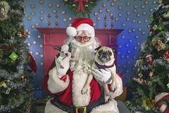26_c_Frank_Frea (Salty's Pet Supply) Tags: santa photo holiday christmas xmas dog dogs cat pets fang portland pdx oregon charity pongo matthowl nancyfedelem christmasstory backdrop iphone canon iphonography portrait community