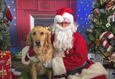 16_b_Friday (Salty's Pet Supply) Tags: santa photo holiday christmas xmas dog dogs cat pets fang portland pdx oregon charity pongo matthowl nancyfedelem christmasstory backdrop iphone canon iphonography portrait community
