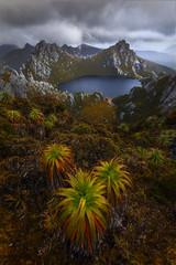 The Wild (Dylan Toh) Tags: tasmania australia westernarthurs lakeoberon wilderness nature hike trekking adventure everlookphotography pandani australiangeographic southwestnationalpark canon sony nisifilters