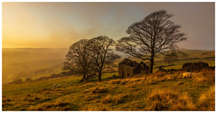 Roach End Barn. (Ian Emerson (Thanks for all the comments and faves) Tags: theroaches peakdistrict staffordshire upperhulme winter mist sunset trees barn derelict landscapephotography canon6d canon outdoor sheep farmland