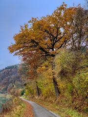 Autumn mood by the river Inn in Kiefersfelden, Bavaria, Germany (UweBKK (α 77 on )) Tags: bayern bavaria germany deutschland europe europa iphone autumn autumnal fall herbst mood tree color path hike river inn kiefersfelden outdoors nature