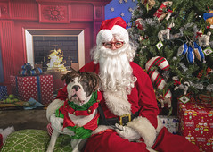 22_b_Miles (Salty's Pet Supply) Tags: santa photo holiday christmas xmas dog dogs cat pets fang portland pdx oregon charity pongo matthowl nancyfedelem christmasstory backdrop iphone canon iphonography portrait community