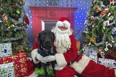 37_b_Morley (Salty's Pet Supply) Tags: santa photo holiday christmas xmas dog dogs cat pets fang portland pdx oregon charity pongo matthowl nancyfedelem christmasstory backdrop iphone canon iphonography portrait community