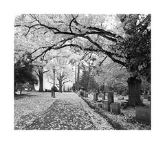 Old Chapel Hill Cemetery (Joe Franklin Photography) Tags: oldchapelhillcemetery chapelhill unc northcarolina nc uncch blackandwhite monochrome autumn leaves fall almostanything