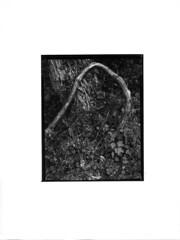 4x5 Contact Print (Holden Richards) Tags: 4x5 omegab66enlarger dektol13slavichunibrompaper timeolite holdenrichards blackandwhite vintage4x5cameralargeformat silvergelatinprint